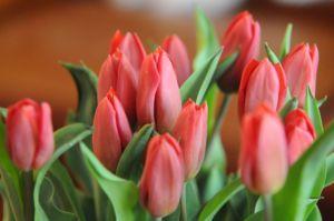 Décoration florale tulipes rouges par Gastronomia Traiteur